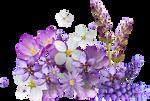 Floria by KmyGraphic