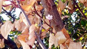 Wax cherry by KmyGraphic