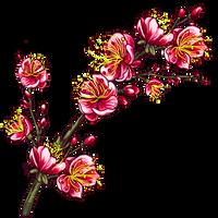Spring blossom by KmyGraphic