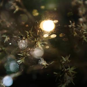 The Glitter Glissade