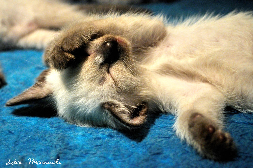 sleeping kitten by lidia-art