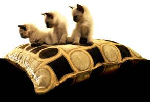 three siamese kittens by lidia-art