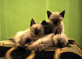 three-or four-sleeping kittens by lidia-art