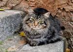 Spanish Cat
