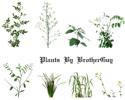Some PNG plants by BrotherGuy