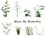 Some PNG plants