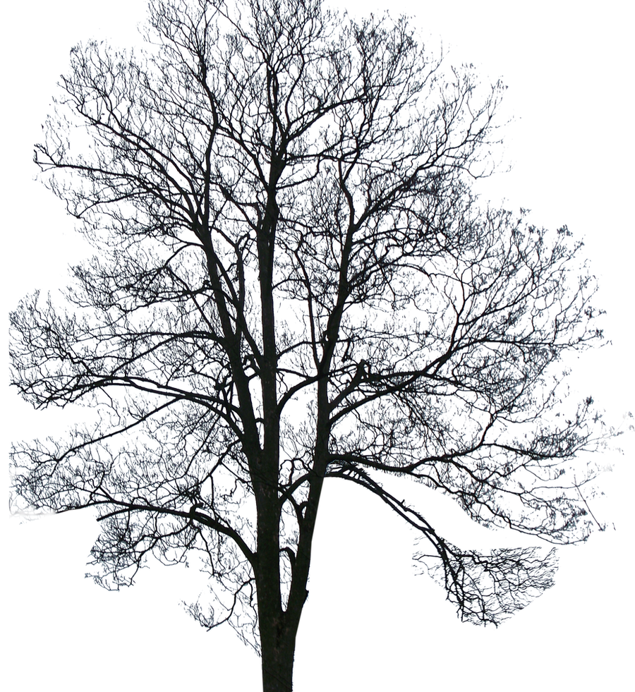Tree01_by_brotherguy by BrotherGuy