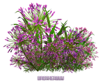 Flowers02 by brotherguy