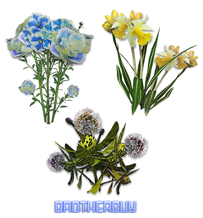 Flowers07 by brotherguy by BrotherGuy