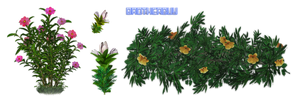 Flowers08 by brotherguy