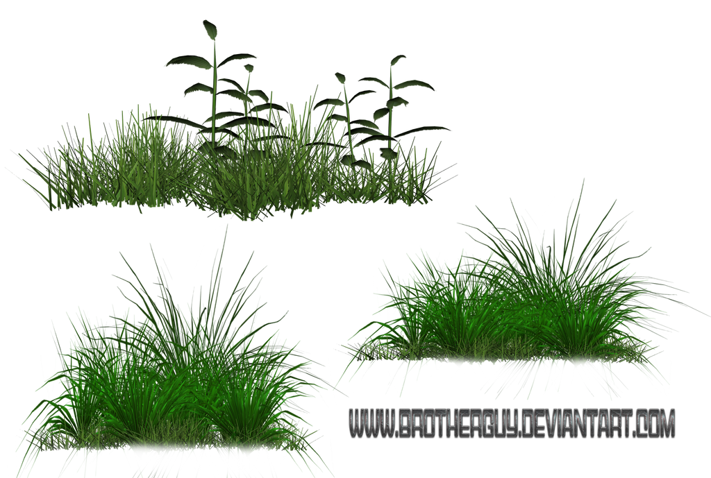 Some PNG Grass by brotherguy by BrotherGuy