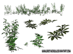 Some PNG Plants4 by brotherguy