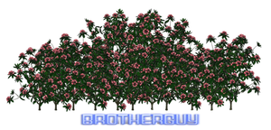 Some PNG Flowers by brotherguy