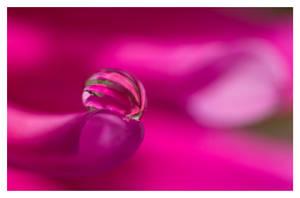 Hot Pink lll by Jenni77