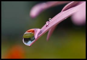 Falling Gracefully by Jenni77