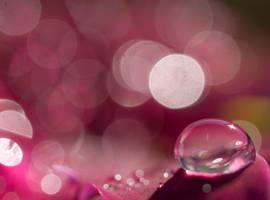 Circles by Jenni77