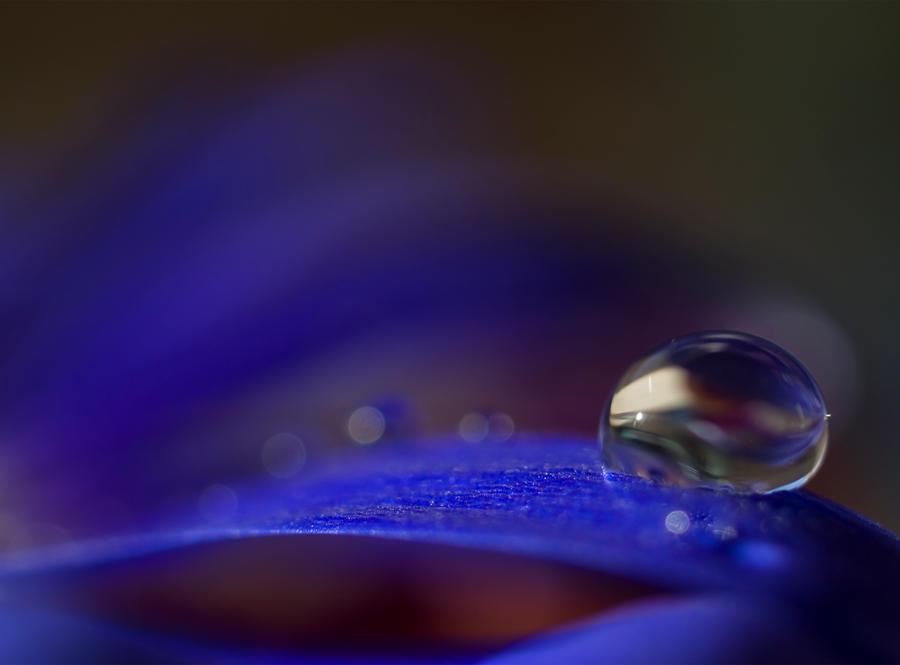 Violet Blue by Jenni77