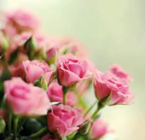 Tenderness of flowers 1