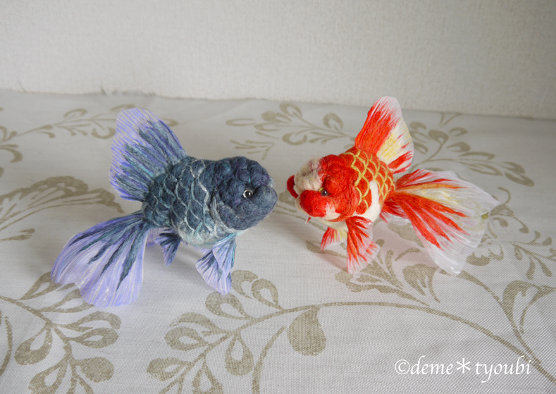 A red and white oranda and a blue oranda! by demetyoubi