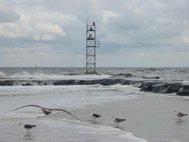Seagulls by cgi