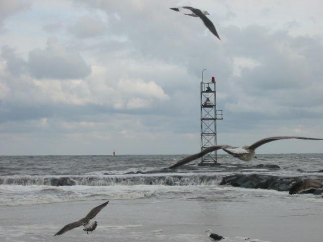 Seagulls in Flight by cgi