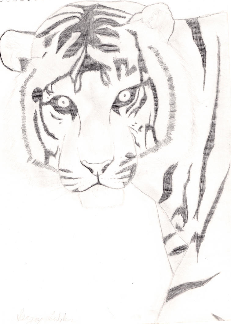 Tiger pencil drawing by Omegaserge101 on DeviantArt