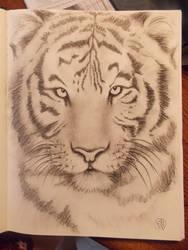 SketchBook: Tiger