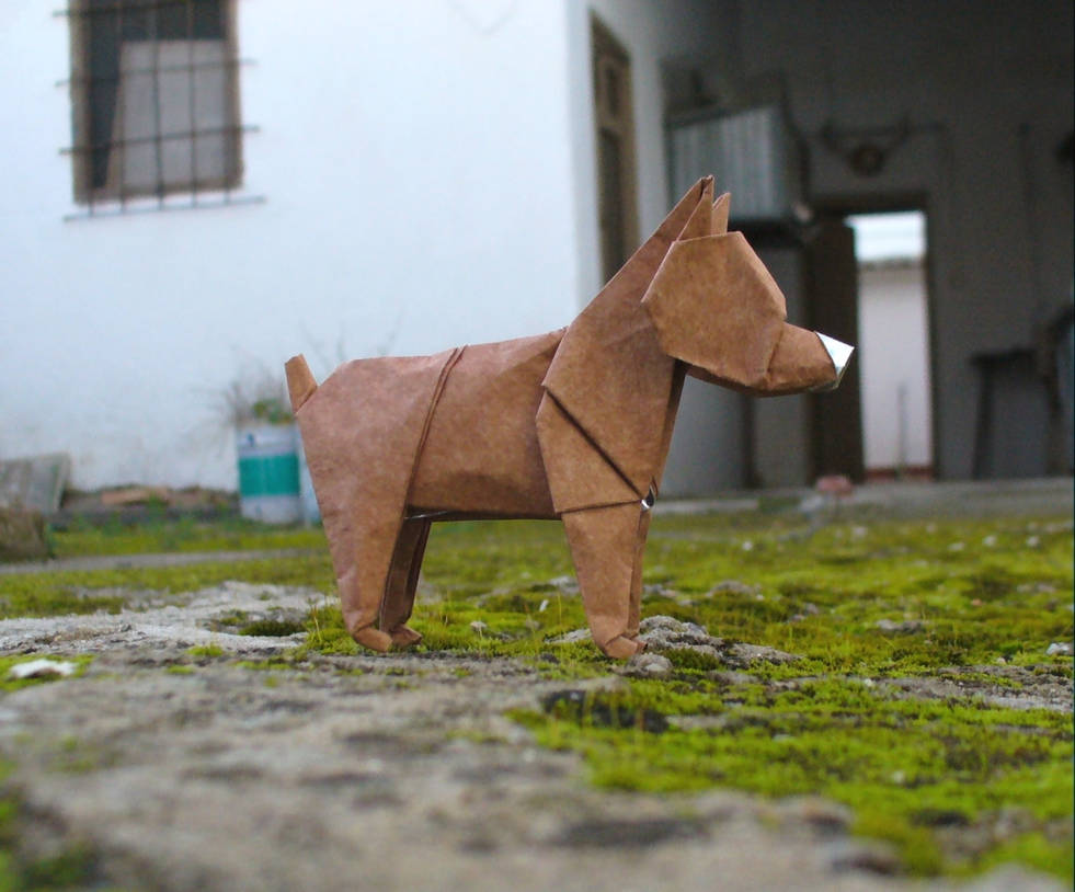 Perro rabon - Tailless dog by Figuer