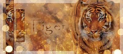Tiger by lilylolalay