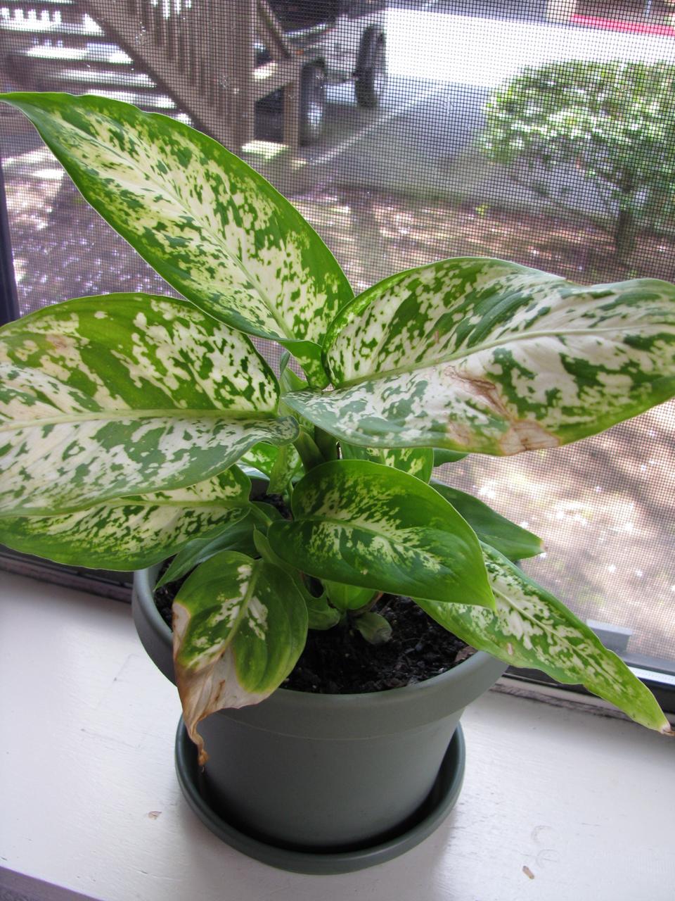 tropical house plantbluemiles on deviantart