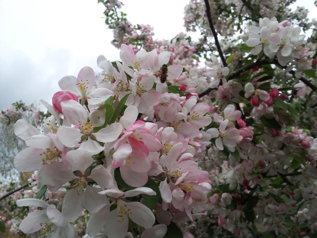 Small Light Pink Tree Flowers By Mahnialiceskaggs On Deviantart