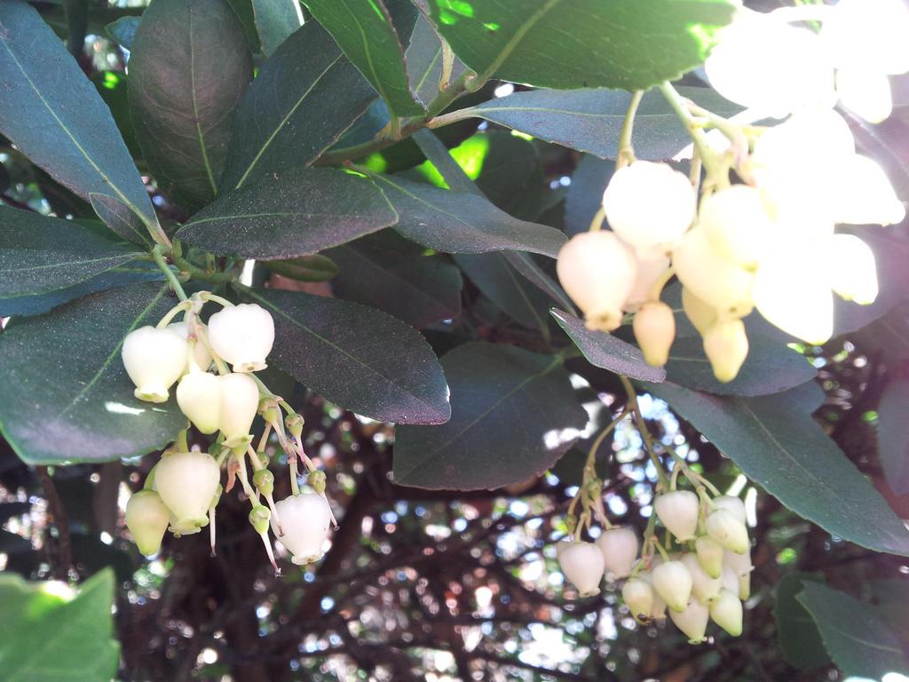 Tiny white bell flowers by mahnialiceskaggs on deviantart tiny white bell flowers by mahnialiceskaggs mightylinksfo