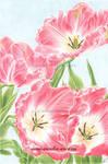 Tulips by aurelia-acc