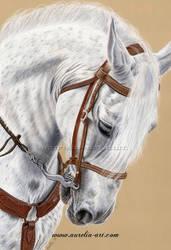 Horse Portrait 01 by aurelia-acc