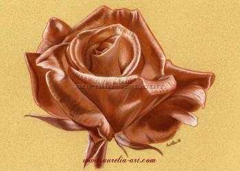 Sanguine Rose by aurelia-acc
