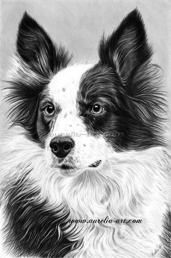 Dog Portrait 02 by aurelia-acc