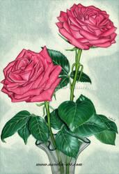 Roses by aurelia-acc