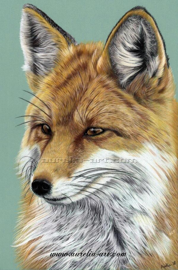 Fox Portrait 01 by aurelia-acc