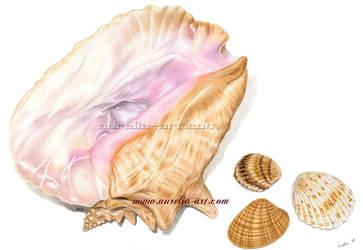 Seashells 01 by aurelia-acc