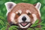 Red Panda Portrait 01 by aurelia-acc