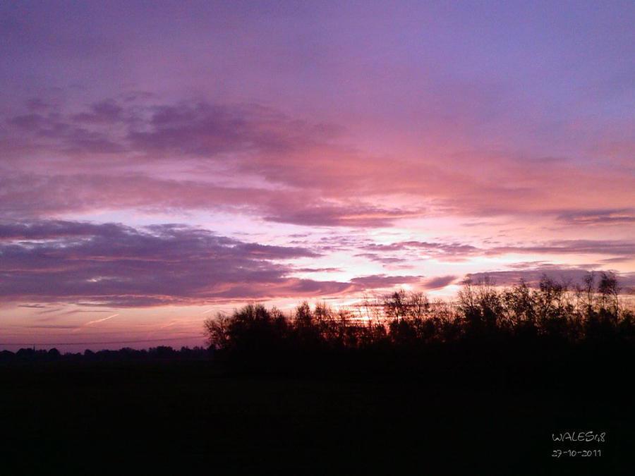 Purple dreams by wales48
