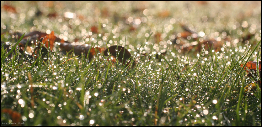 herbst gras by herbstkind