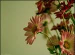 florescence II