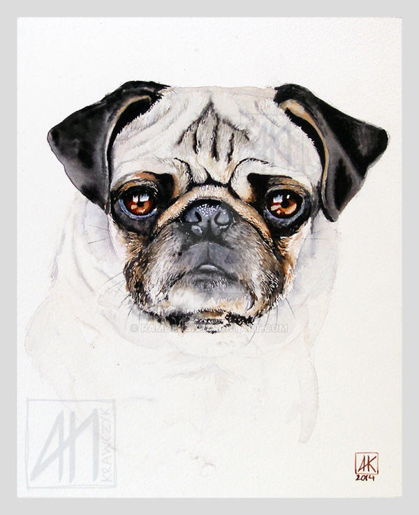 Classic dog portrait - Pug by ramdens