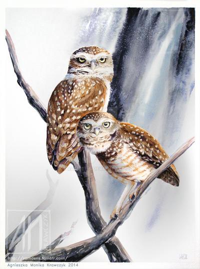 Burrowing owls by ramdens