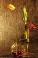 Tulip  Love by OmarAziz