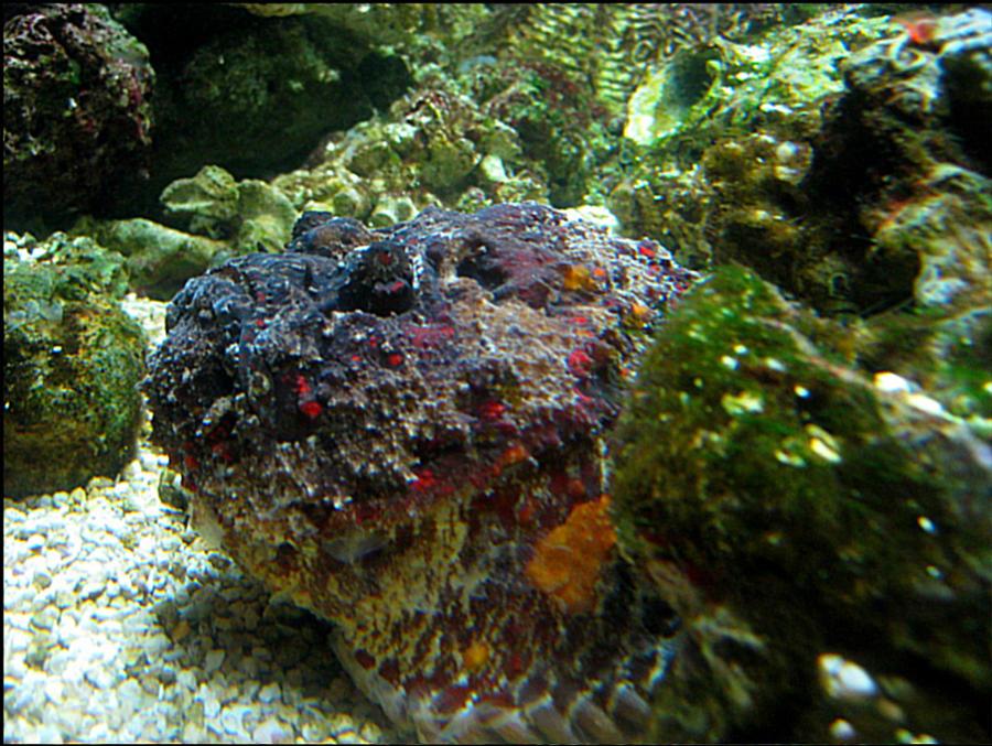 Rock Fish wallpaper > Rock Fish Papel de parede > Rock Fish Fondos