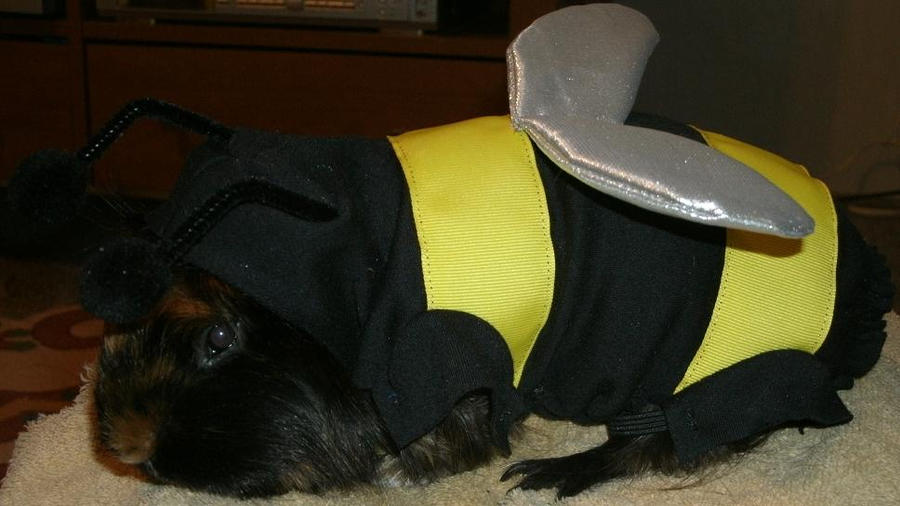 Scuzzy the Guinea-bee by MadForHatters