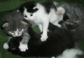 Kitty Pile by MadForHatters