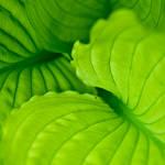 Green World by Kaddieee